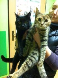 Mačičky MICKA & LINDA