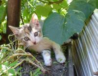 tříbarevné kočičky - ADOPTOVANÁ