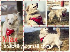 Max z SOS Psíky ♥