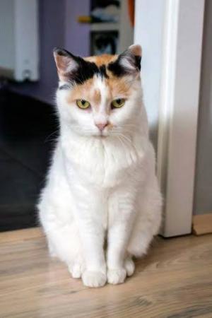 Krásná tříbarevná kočičí babička Mia ♥♥♥