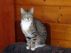 Mladý kočičí klučík Damiánek ♥