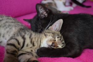 Mačiatkovo, krpci hľadajú nie naj domovy
