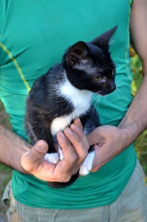 Tilda - mačička