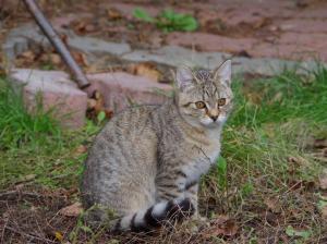 Mazlivá, akční kočička Ája ♥