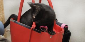Koťátko Černuška a její kamarádi hledají domov