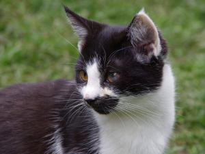 Koťátko, kočička Bejbinka hledá domov ♥