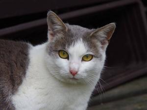 Klidná kočičí kráska Sisinka touží po domově ♥