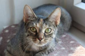 Kočička Lily k adopci