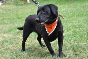LEYA - Dokonalý rodinný terapeutický pes