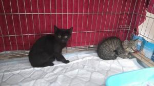 Kočičky, koťátka, Leontýnka a Kájinka hledají domov ♥