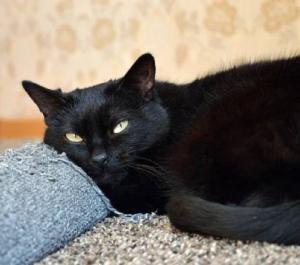 Černá kočička hledá domov