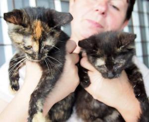 ZORKA a DORKA - koťátka z Broumova
