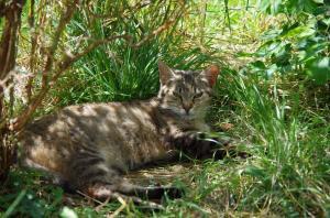 Tygřice, krásná kočička Amálka ♥
