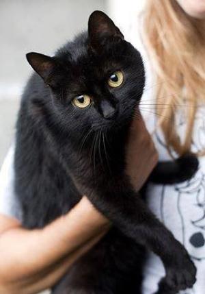 Kočičí bůžek lovu Artemis. Bude vám s ní jako v nebíčku!