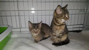 Kočičí děti lesa Jahůdka a Jasmínka