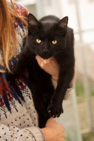 Vznešená Athéna aneb kočička s charakterem!