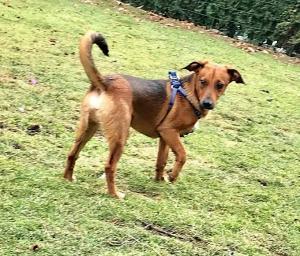 RENDY - Hodný a přátelský psí kluk