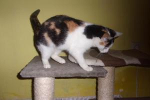 Trojčlenka koťátko hledá domov