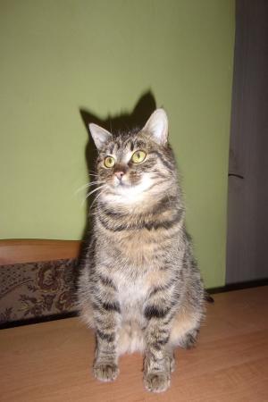 Kočička Diabolka hledá domov