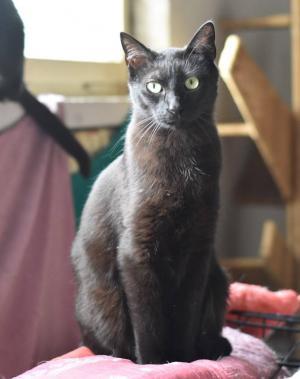 CHILLI - Kráska v černém