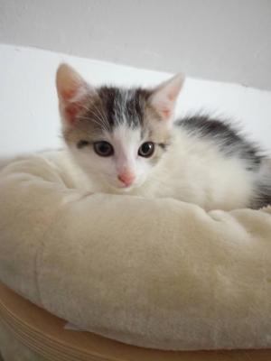 Koťátko – kocourek Dušánek