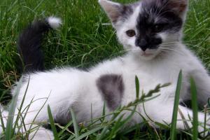 Kočičky koťátka hledají domov