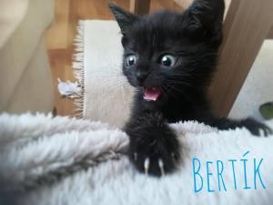Bertík a Betka - ADOPTOVANÝ