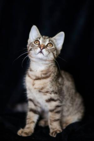 Havana ❤ 3-mes. mačička