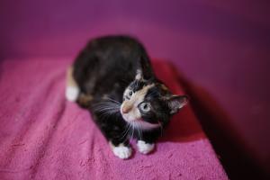 ♥ Sladké koťátko Amethyst hledá domov ♥