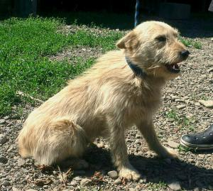 DERYK - pohodový psí kamarád hledá láskyplný domov