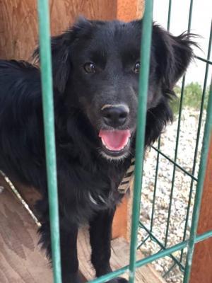 RICKY - Odrostlé štěně hledá báječný domov