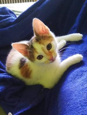 ❤ Koťátko tříbarevné májové ❤ hledá domov