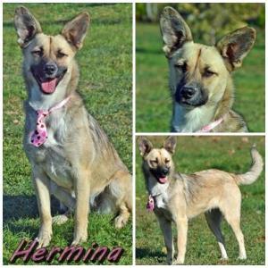 Hermína