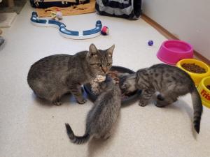 Maminka s koťátky - ADOPTOVANÁ
