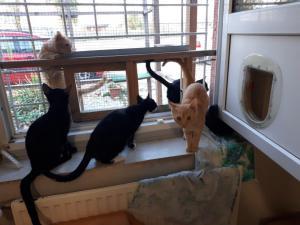 Kočičky z Prahy