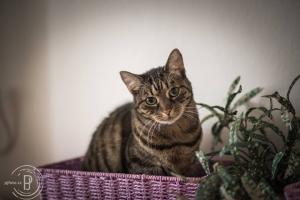Kočičky z depozita čekající na domov