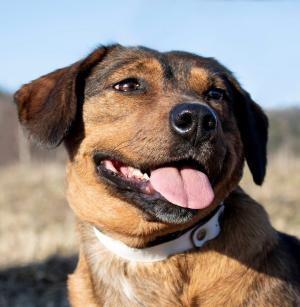 OLIVIA - Miloučká psí slečna:-)