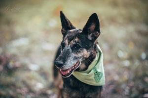 SALLY - Nejúžasnější a nejvděčnější psí babička