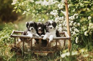 Lotta, Lussy a Laim