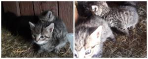 Kočičí sirotci - ADOPTOVANÁ