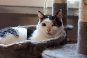 DAUNIČKA - Kastrovaná kočička s kouzelným pohledem