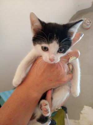 Kočičky/koťátka k adopci