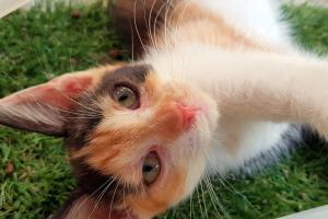 KOLORKA našla nový domov s kočičí kámoškou :-)