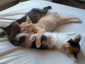 4 úžasní kočičí sourozenci hledají domovy