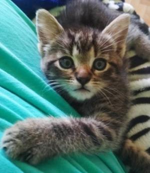 ❤ Nádherná kočička, malá roztomilá čertice ❤