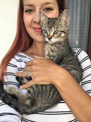 MAXÍK - 3 měsíční kočičí mourek
