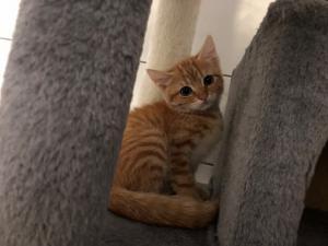 KOŤÁTKA z útulku Broumov k adopci - kočičky i kocourci