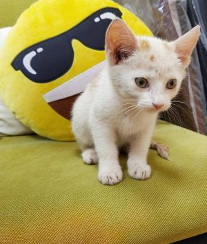 BLEŠKA - Rozkošné koťátko