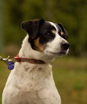 LUMPÍK - Přítulný a společenský pes