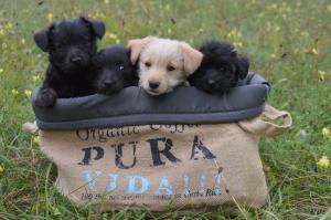 Malinké šteniatka hľadajú nový domov!